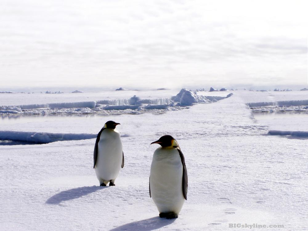 Penguins chilling in Antartica in front of the Antartic Skyline
